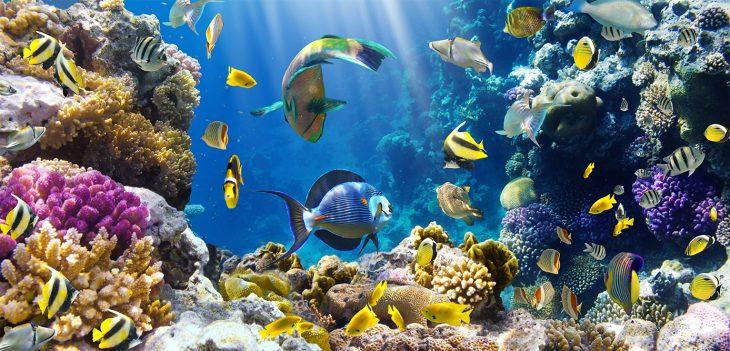 Veliki Koralni Greben Australija