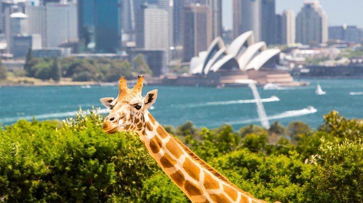 Taronga zoo u Sidneju