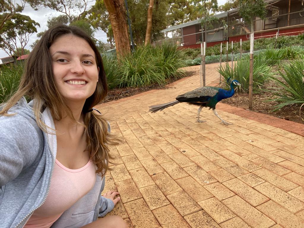 Studije u Zapadnoj Australiji